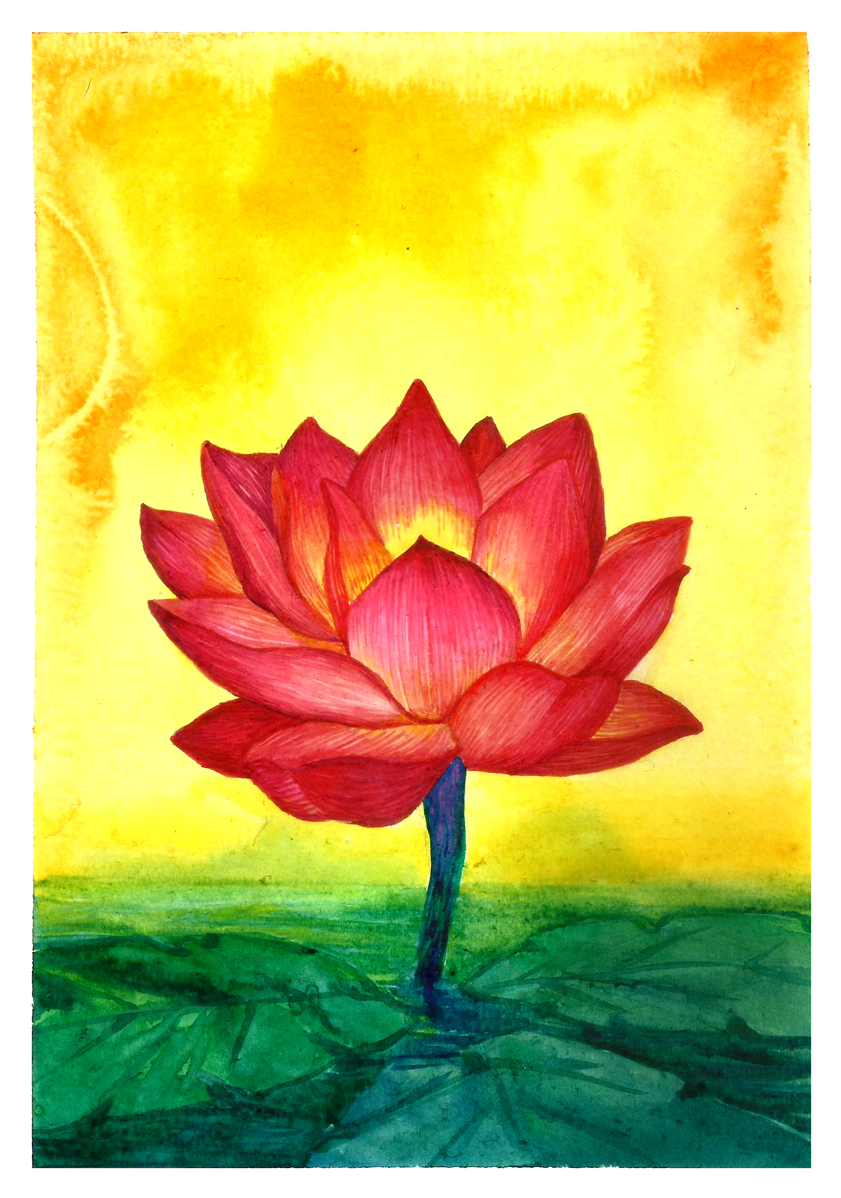 lotus_Traditional Illustration